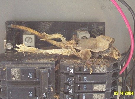 Toasted Rat